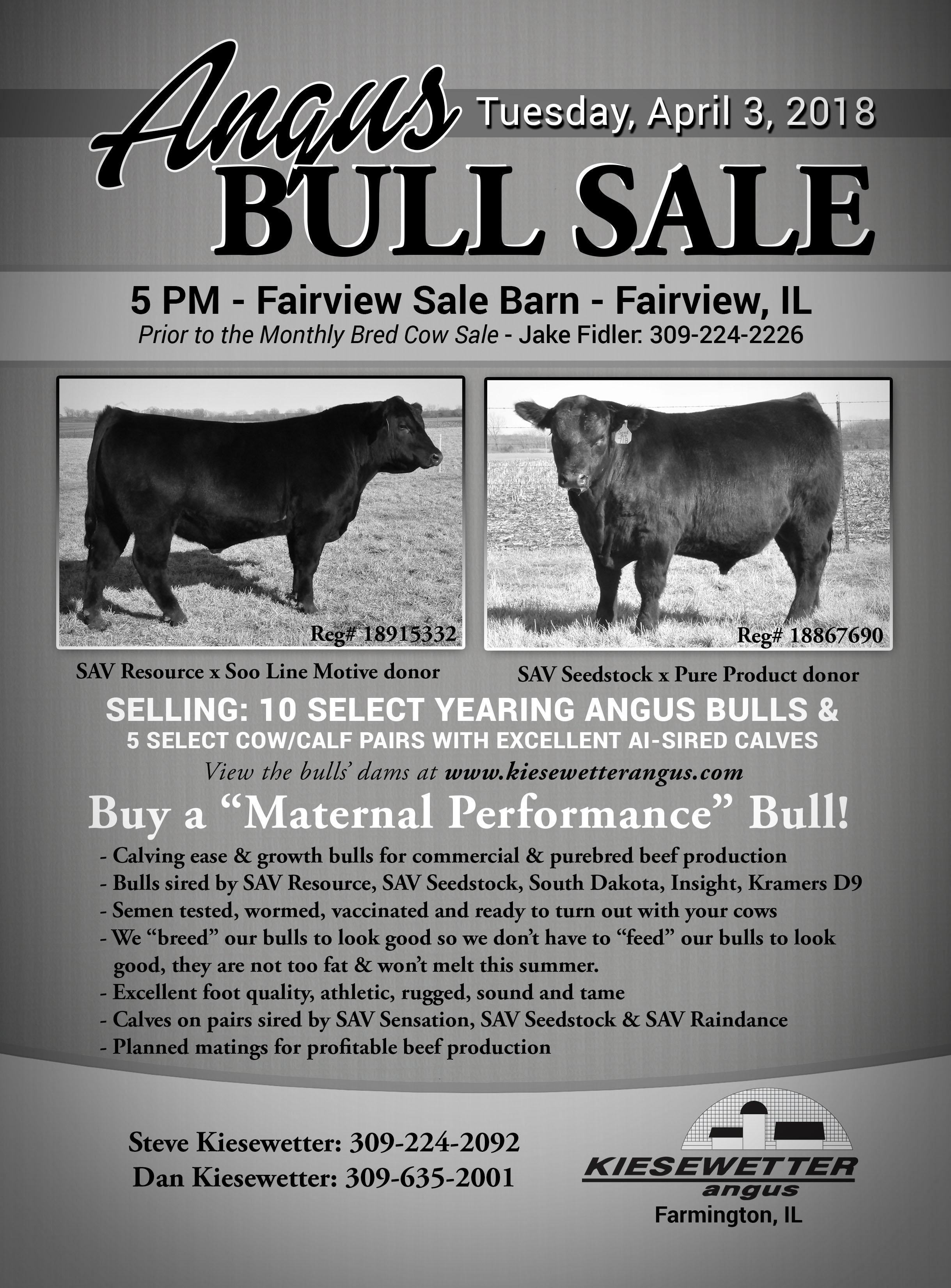Angus Bull Sale