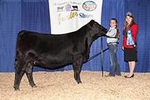 Emily showing her class winning heifer Top Line Abigale 6074 at the Eastern Regional show in Louisville, KY.